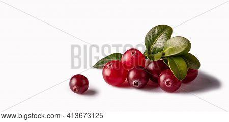 Cranberry Isolated On White Background. Macro Photo. Fresh Berry