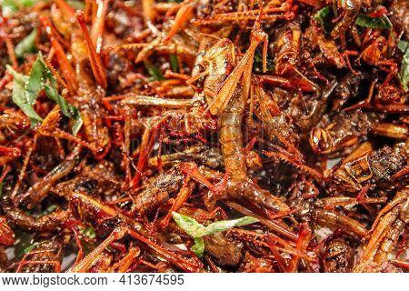Closeup Of Deep Fried Locusts On The Market In Bangkok, Thailand