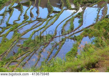 Rice Terrace Landscape In Philippines. Rice Terraces Of Batad, Philippines.