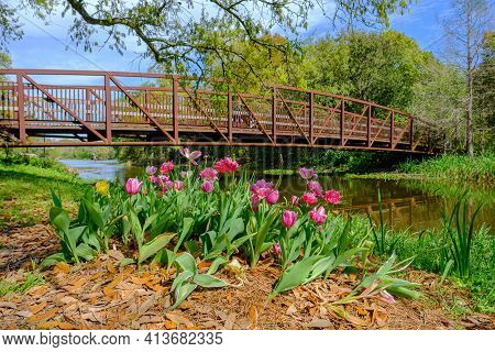 Tulips In Bloom At Entrance To Couturie Forest In City Park, New Orleans, La, Usa