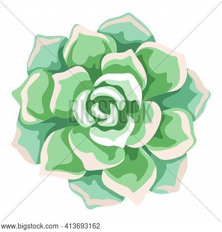 Illustration Of Succulent. Decorative Home Plant. Natural Image.