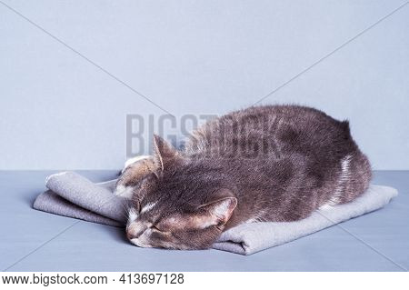 A Gray Cat On A Gray Blanket Sleeps On A Gray-blue Background