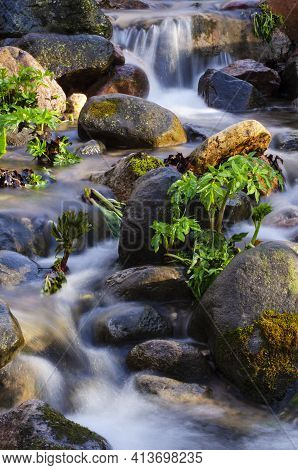 A Section Of Parfrey's Glen Creek Is Detailed In This Spring Scene, Parfrey's Glen State Natural Are