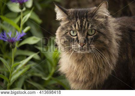 Tabby Cat On Rock In Flower Garden In Springtime