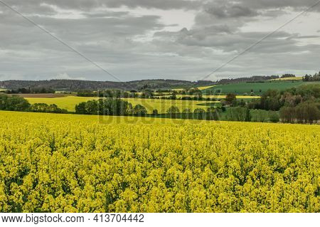 Yellow Oilseed Spring Field. Beautiful View Of Colorful Landscape.agricultural Nature Scene Copy Spa