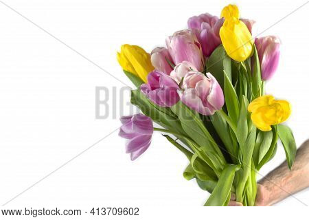 Tulips In A Field Of Tulips. Bright Tulips. Colorful Tulip Flower In The Garden. Beautiful Tulips On