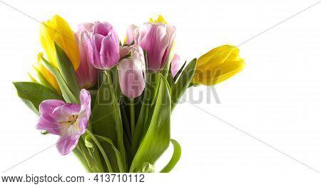 Spring Flower Landscape. Spring Blooming Spring Flowers. Flowers In Spring. Spring Flower Landscape.