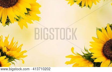 Sunflower Flower. Colorful Flower. Flower In The Garden On A Sunny Summer Or Spring Day. Flower For