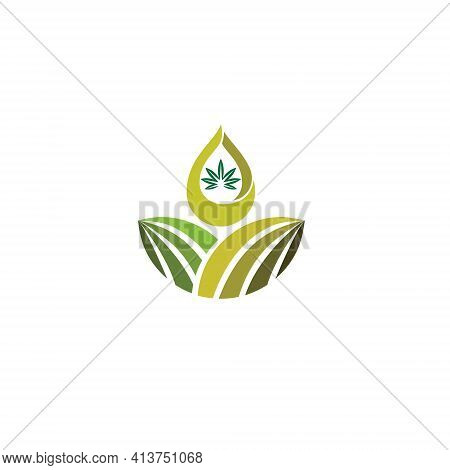 Vector Illustration. Logo With The Concept Of Hemp Marijuana Oil From The Plantation Itself. Medical