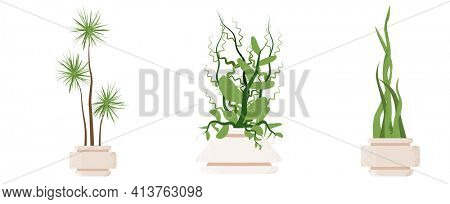 Palm Tree Leaves in Pot Isolated on White Background. Houseplant for Decorating Interior of House or Office. Sansevieria Houseplant. Snake Plant in Pot.