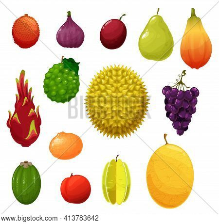 Fruits Icons, Tropical Exotic And Farm Garden Harvest, Vector. Apple And Pear, Tropic Durian And Dra