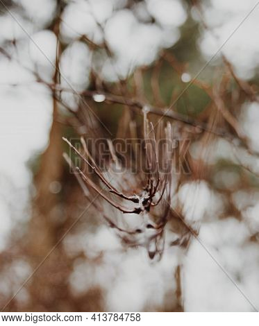 Close-up Of A Brown Tree Branch With A Very Pronounced Blurred Boho In The Background Against The Sk