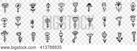Natural Flowers Pattern Doodle Set. Collection Of Hand Drawn Blooming Natural Flowers Ornament Decor