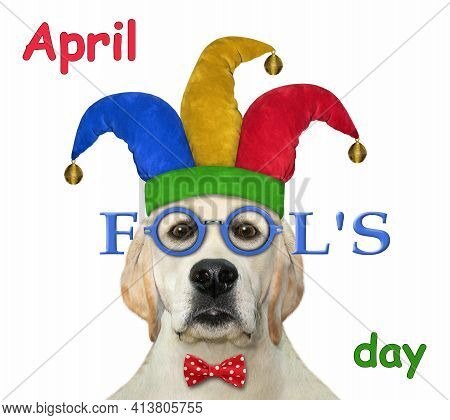 A Dog Labrador Clown Wears A Jester Hat, Red Bow Tie And Glasses. April Fool's Day. White Background