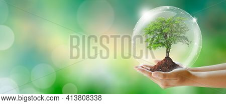 Growing tree in hand with protection from crystal ball. Green background with bokeh. World mental health and World earth day. Saving environment and World Ecology Concept.