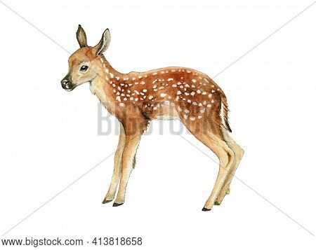 Small Deer. Beautiful Fawn Image. Watercolor Bambi Illustration. Wild Young Deer Animal With White S