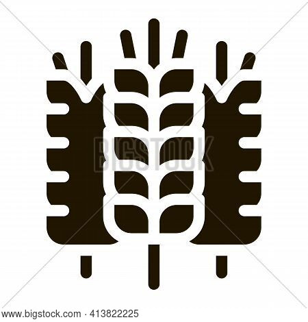 Spikelets Of Wheat Glyph Icon Vector. Spikelets Of Wheat Sign. Isolated Symbol Illustration