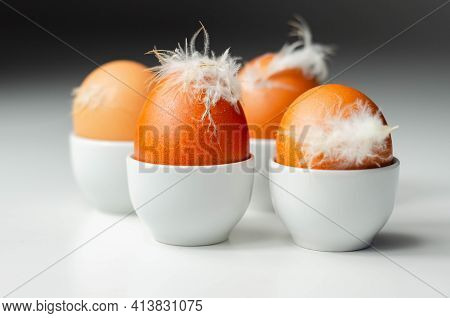 Fresh Eggs From Free-range With Natural Feathers In Egg Cups, Rural And Healthy Dairy Products