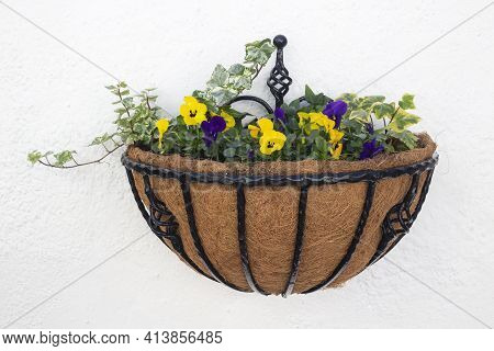 Wrought iron wall basket planted with purple and yellow pansies and ivy, on a white textured wall.