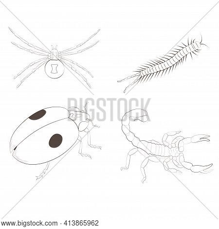 Set With Insects Isolated On White Background. Ladybird, Black Widow, Scorpion And Scolopendra.  Ele