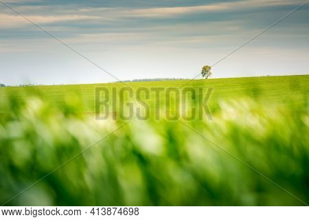 Spectacular view of green rural land and cultivated fields. Location place of Ukrainian agricultural region, Europe. Ecology concept. Photo wallpaper. Abstract natural pattern. Beauty of earth.