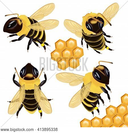 Set Honey Bee From Different Angles On White Background. Bee Icon With Honeycomb. Vector Illustratio