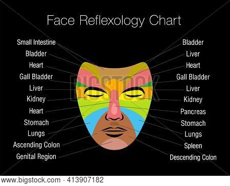 Face Reflexology Chart With Colored Areas And Names Of Corresponding Internal Organs. Colorful Zone