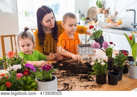 Mess And Dirt On A Table While Spring Home Flowers Planting