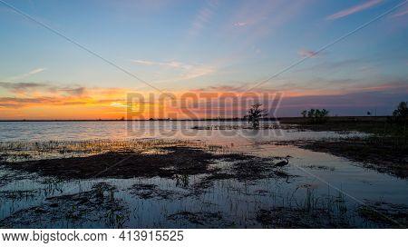 Blue Heron In Mobile Bay, Alabama At Sunset