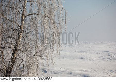 Solar, With A Gaze Winter Morning. A Birch Trunk Fragment With Several Branches In Hoarfrost Against