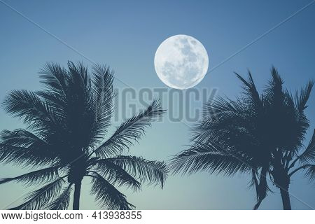 Tropical Night. Full Moon And Palm Tree Abstract Background. Copy Space Of Nature Environment And Tr