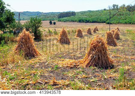Haystacks On The Cornfield . Autumn Scene With Agricultural Field