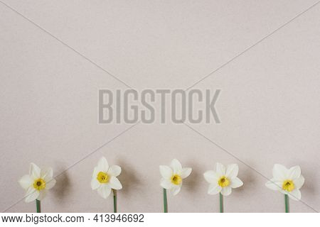 Spring Flowers. Daffodil On A Beige Background. A Bouquet Of White Daffodils. Floral Background. Hap