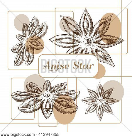Anise Stars Packaging Design. Hand Drawn Aniseed Label, Banner, Sticker Or Logo. Layout Template. Sk