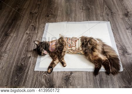 One Adult Cat With Bandages Recovering From Surgery For Sterilization Lies On Diaper Unconscious. Th