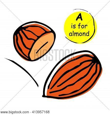 Almonds Nuts Hand Drawn Vector Llustration Sketch. Doodle. Concept For Kids Children Alphabet Print,