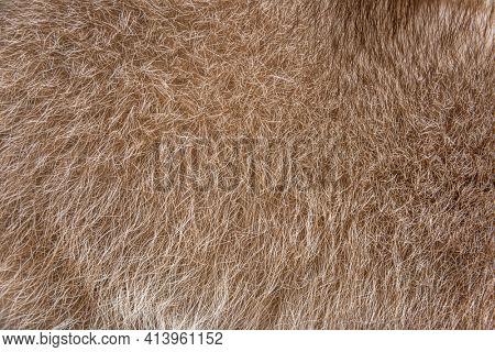 Fur closeup on a brown raccoon fur
