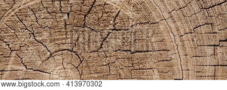 Structure of an old cut on a pine