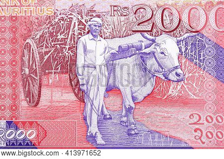 Man With A Mule From Mauritian Money