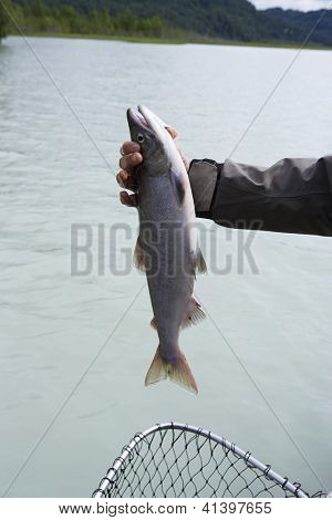 Male hand holding fresh catch of the day over net with river in background poster