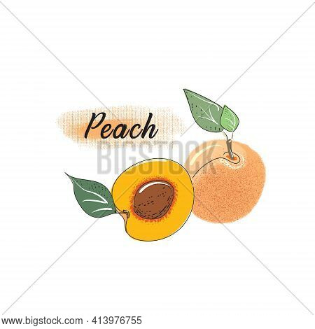 Vector Drawing Of An Peach. Drawn Fruit Of A Whole Peach, Branches And Halves Of An Peach. Detailed