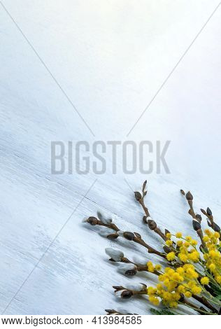 Mimosa And Verba On Gray Background. Branches Of Mimosa And Verba On Wooden Background.