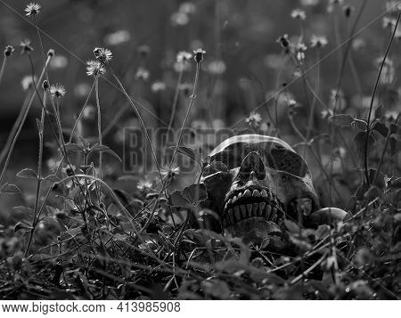 The Still Life Of A Long Deceased Human Skull, Located In The Middle Of A Forest