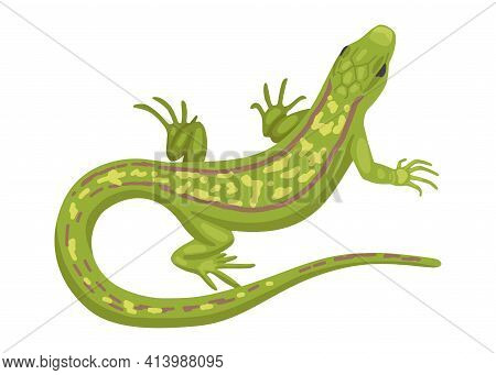 Lizard, A Green Small Reptile, A Species Of Common Lizard. Vector Animal On White Background, Cartoo