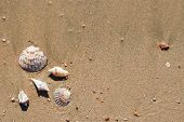 different seashells on a beach sand marine landscape poster