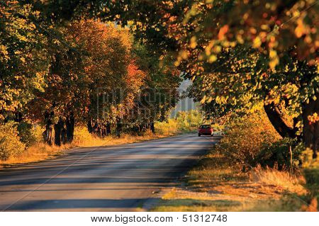 Forest Road And Car