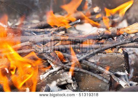 Tree Branches Burning.