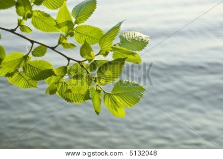 Foliage And Water