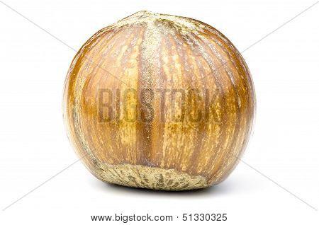 Single Hazel Nut