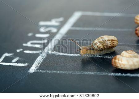 Racing snails close-up